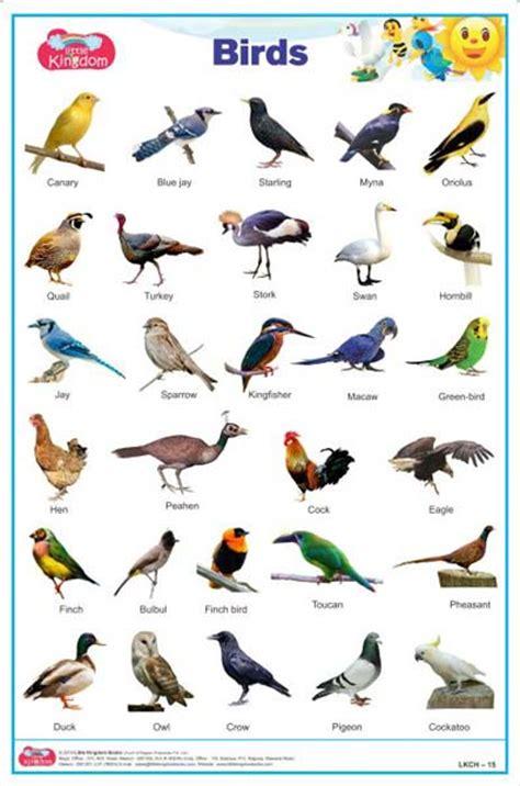 indian birds chart