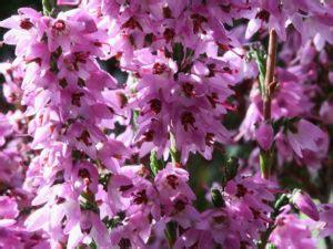 fame nervosa fiori di bach fame nervosa come gestirla con i fiori di bach curarsi