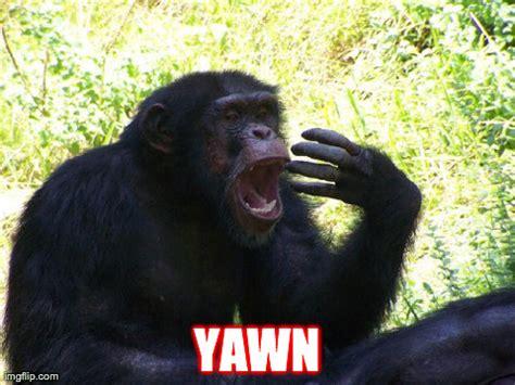 Chimp Meme - image tagged in chimp imgflip