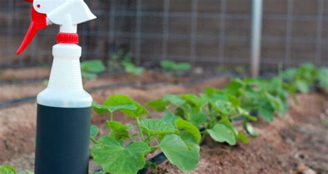 natural garden pesticides   work
