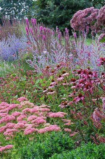 cottage garden border plants beautiful garden borders and purple salvia on