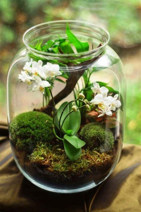 orchideen pflege tipps und wissenswertes ueber die