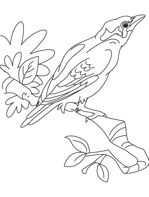 mynah bird coloring page a beautiful myna bird coloring page download free a