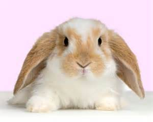 lunar years of bunny see birth to einstein confucius queen victoria lewis carroll curie