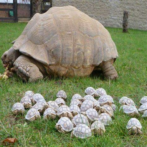 25 best ideas about turtles on baby