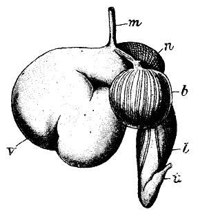 cadenas alimenticias fáciles para dibujar kossans fyra magar n 246 tkreatur lantdjur ifokus