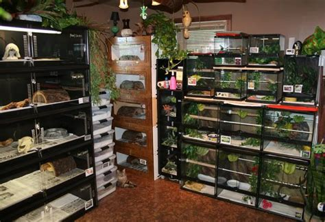 Reptile Rooms by 166 Best Animals Images On