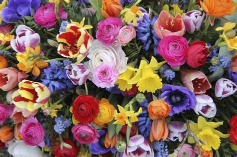 bright colored flowers what color flowers to give for a funeral our everyday