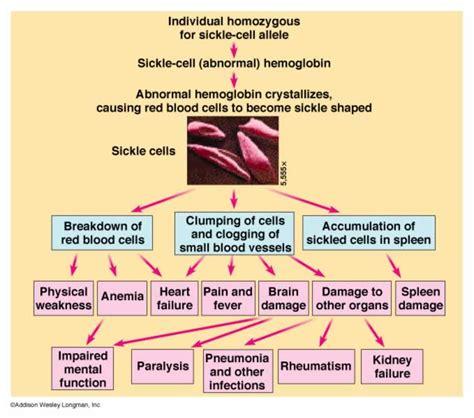 sickle cell diagram anemia diagram