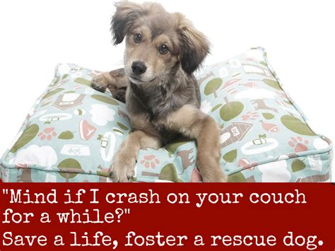 fostering dogs save one soul animal rescue league homepage