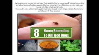 Bed Bug Home Remedy by Home Remedies To Kill Bed Bugs Brilliant 778 Best Bed Bug Images On Inspiration Design