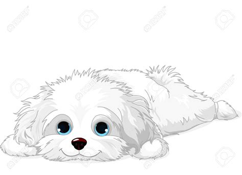 havanese dog coloring page maltese clipart cute puppy pencil and in color maltese