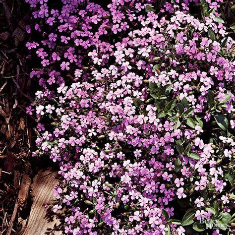 garden resources and trends fall blooming perennials low maintenance perennials for the northeast perennials