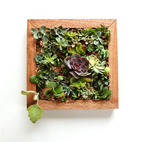 Small Wall Planter by Small Succulent Vertical Garden