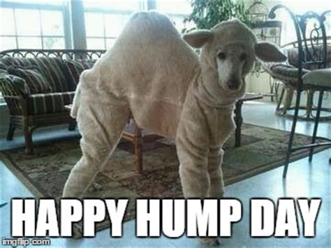 Happy Hump Day by Happy Hump Day Archives The Dogparents The