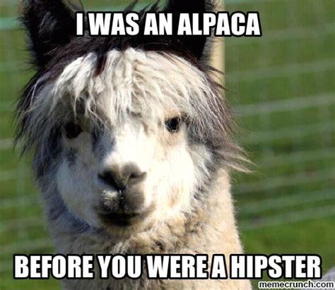 Alpaca Sheep Meme - 49 best alpacas images on pinterest funny animals llama