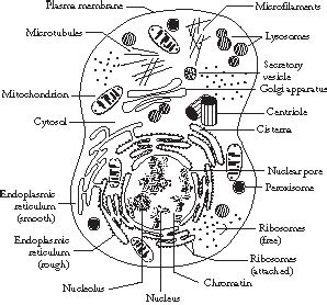 the structure of prokaryote and eukaryote cells