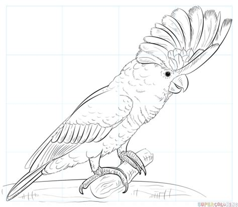 Cockatoo Drawing how to draw a white cockatoo step by step drawing tutorials