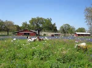 Pleasanton Flower Shop - 14 74 acres in atascosa county texas