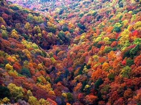 peak fall foliage in ga fall color in