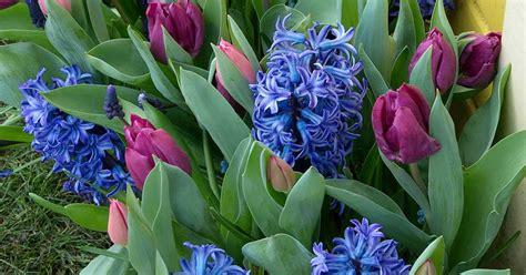 Holen Sie sich den Frühling in den Kasten Garten Sauer