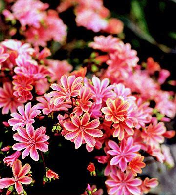 flowering shrubs pacific northwest 15 top plants of the pacific northwest sun