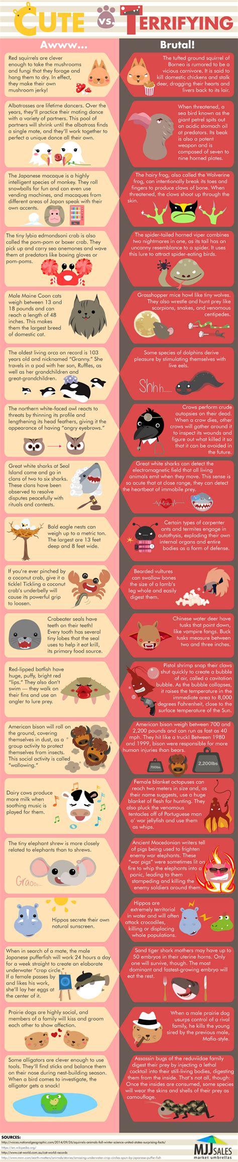 infographics animal kingdom 1848776543 adorable and horrifying animal facts infographic animals animal facts animals facts