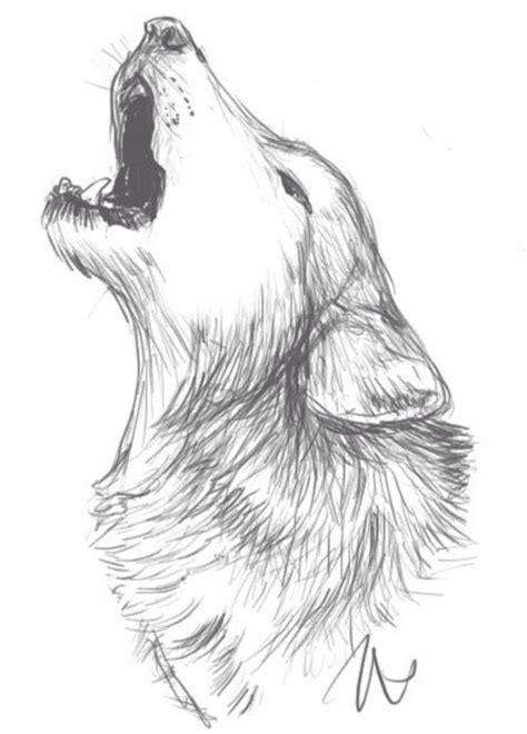 doodle viewer 25 unique wolf drawings ideas on wolf
