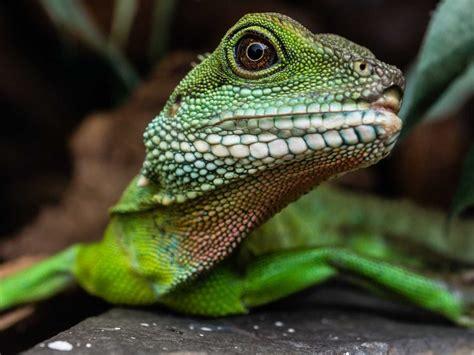 lizard squad     silent business insider