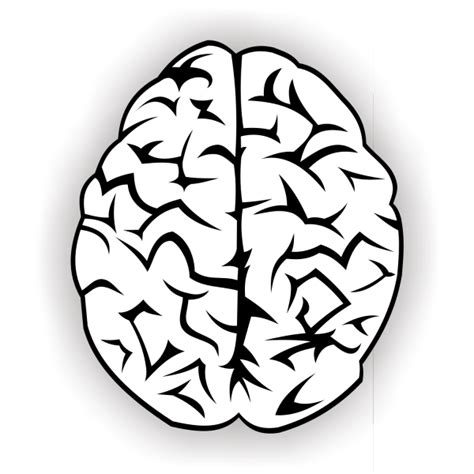 brain clipart brain vector free vector