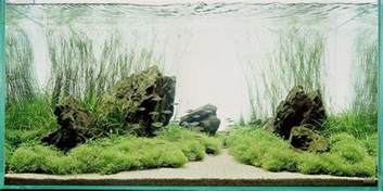 nature aquarium style aquascapes aquascaping world forum