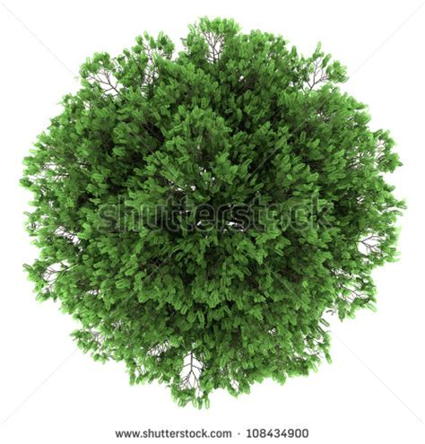 Trees Top 15 tree top view vector images tree top view tree top