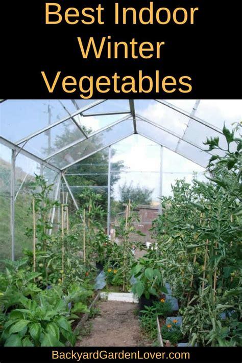 indoor winter vegetable garden for cold season harvest