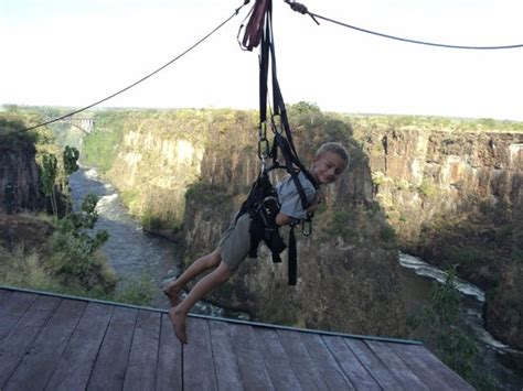 flying fox swing zip line picture of wild horizons gorge swing highwire