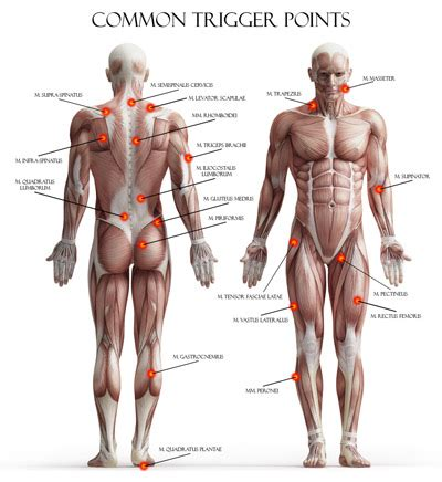 Improving Bench Press Strength Vitae Educational Articles Trigger Point Therapy