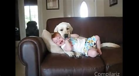 babies laughing at dogs daily pet babies laughing at dogs rtm rightthisminute