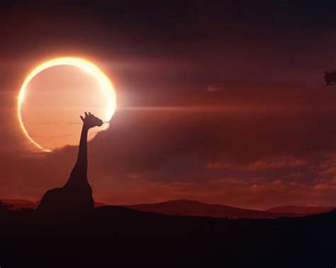 beautiful solar solar eclipse wallpapers wallpaper cave
