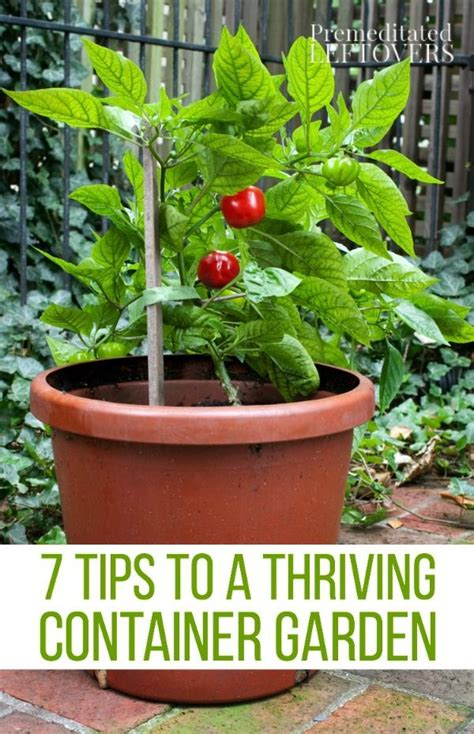 17 best ideas about container gardening on