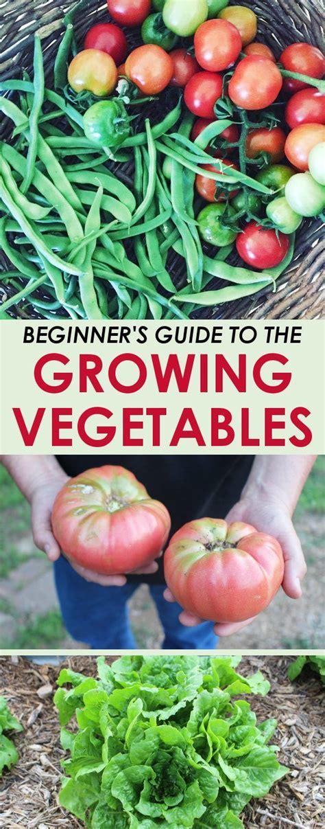 Best Time To Water Vegetable Garden 3663 Best Gardening Tips Images On Vegetable