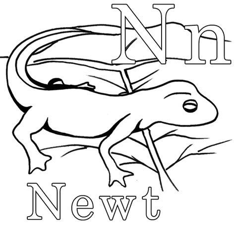 newt coloring page animals town free newt color sheet