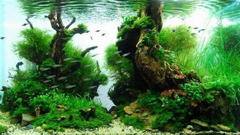 design aquascape murah beautiful aquascaping photo collection quertime