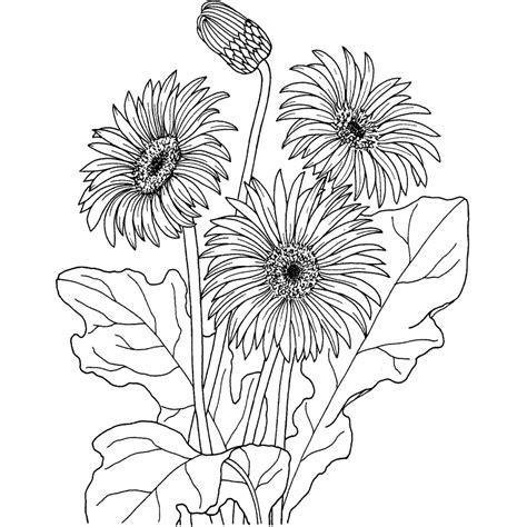imagenes flores exoticas para colorear flores para colorear dibujos flores para colorear