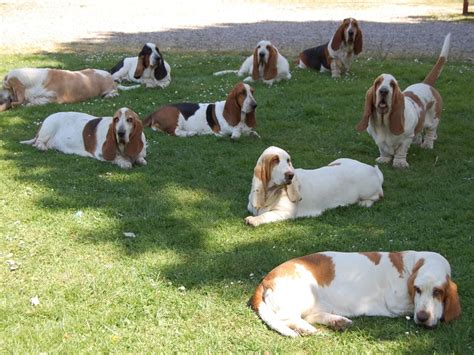 Pets You Can Find In Your Backyard by Pets You Can Find In Your Backyard 28 Images The Best