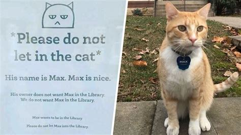The Cat max the cat is banned from library becomes