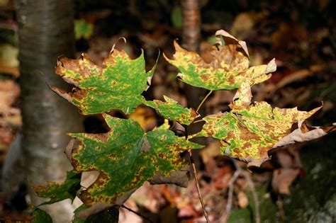 Burn Leaves In Backyard by 100 Burn Leaves In Backyard 3 Ways To Keep A