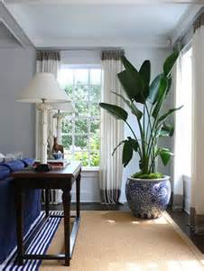 Best Plants For Living Room by Leopard Amp Lime A Not So Perfect Florida S Take On