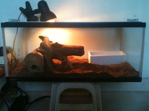 Lu Uvb Untuk Reptil fan s reptiles monitor dan cara perawatannya