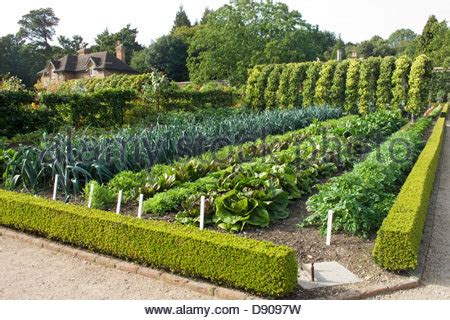the walled garden wrington 100 the walled garden wrington dahlias in the