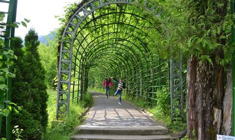 Garden Arbor Tunnel Near Munich Linderhoff Palace Vine Tunnel