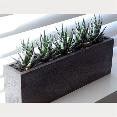 Cactus Planters by 5 X Cactus Kiri Wood Planter Lushmodern Touch Of Modern